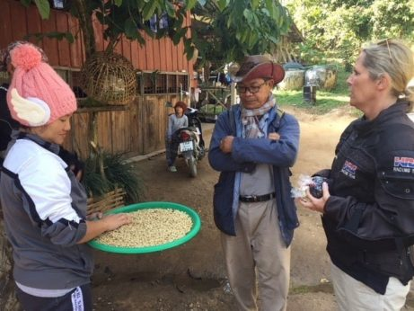 Arabica and Robusta coffee in the Golden Triangle