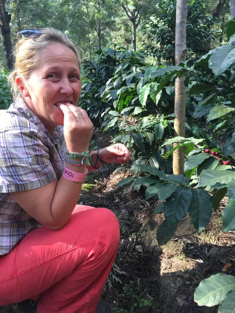 Sampling coffee plantation beans in Guatemala